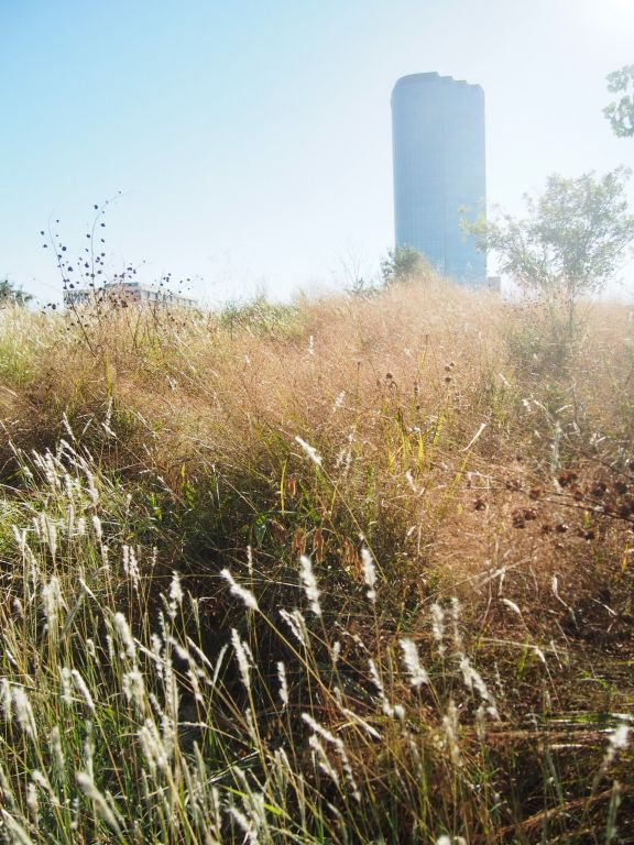 A 15-acre native park in the middle of downtown Dallas.