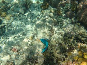 1.6.2016_Reef010