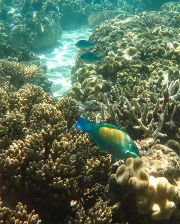1.6.2016_Reef012