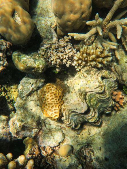 1.6.2016_Reef029