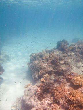 1.6.2016_Reef040