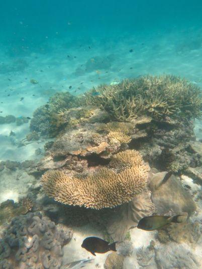 1.6.2016_Reef041