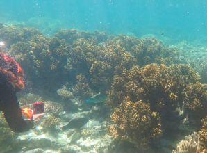 1.6.2016_Reef049