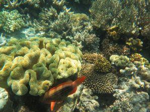 1.6.2016_Reef051
