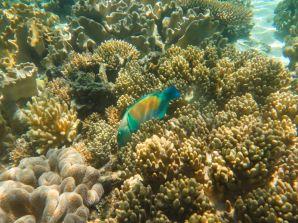 1.6.2016_Reef053