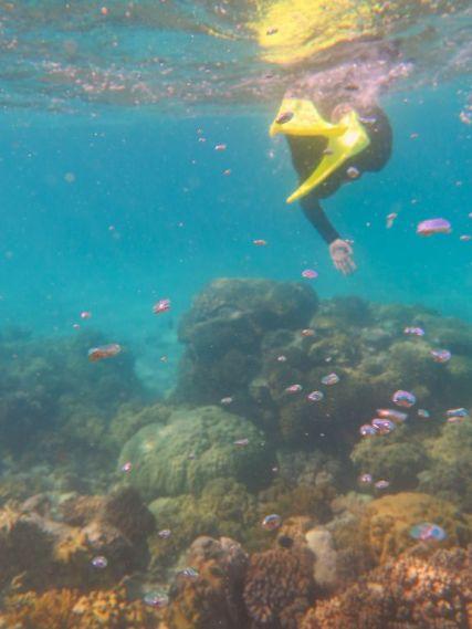 1.6.2016_Reef054