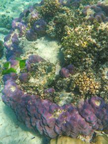 1.6.2016_Reef060