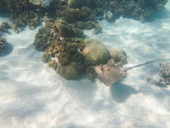 1.6.2016_Reef062