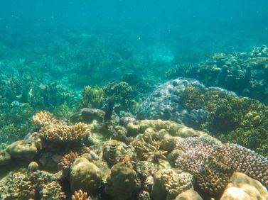 1.6.2016_Reef101 - Copy