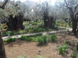 03.07.2016_Gethsemane003