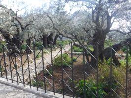03.07.2016_Gethsemane004
