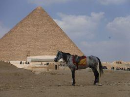 03.17.2016_EgyptPatrick087