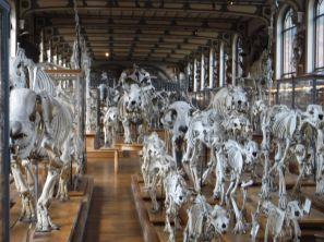 PG.Paris.Natural History Museum004