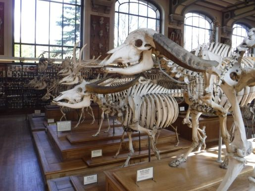 PG.Paris.Natural History Museum005