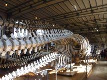 PG.Paris.Natural History Museum006