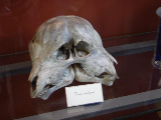 PG.Paris.Natural History Museum007