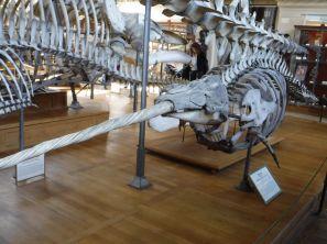 PG.Paris.Natural History Museum008
