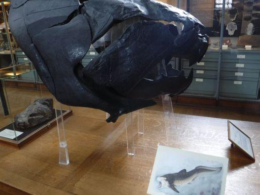 PG.Paris.Natural History Museum014