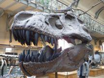 PG.Paris.Natural History Museum016