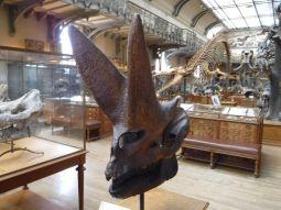 PG.Paris.Natural History Museum018