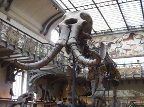 PG.Paris.Natural History Museum021
