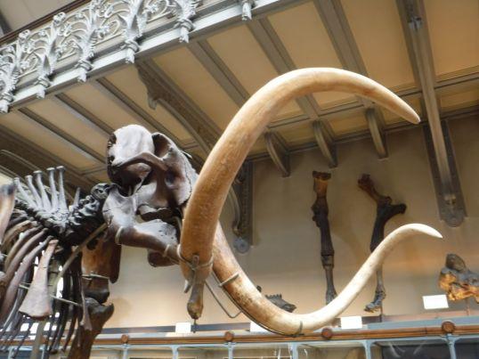 PG.Paris.Natural History Museum022