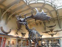 PG.Paris.Natural History Museum023
