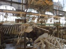PG.Paris.Natural History Museum025