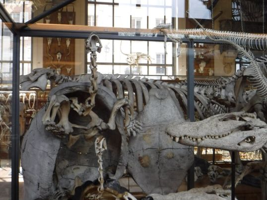 PG.Paris.Natural History Museum027